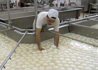 Italia. Dioxina şi Mafia ameninţă industria producătoare de mozzarella