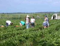 Românii ar putea avea liber la lucru în Spania începând cu 2009