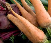 Supermarketurile din U.E. pot vinde din nou legume şi fructe diforme
