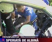 Grav accident rutier, după ce o albină a intrat pe geamul maşinii
