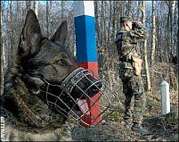 Câinele Poliţiei de Frontieră Slovace s-a aruncat de la etaj pentru că era stresat