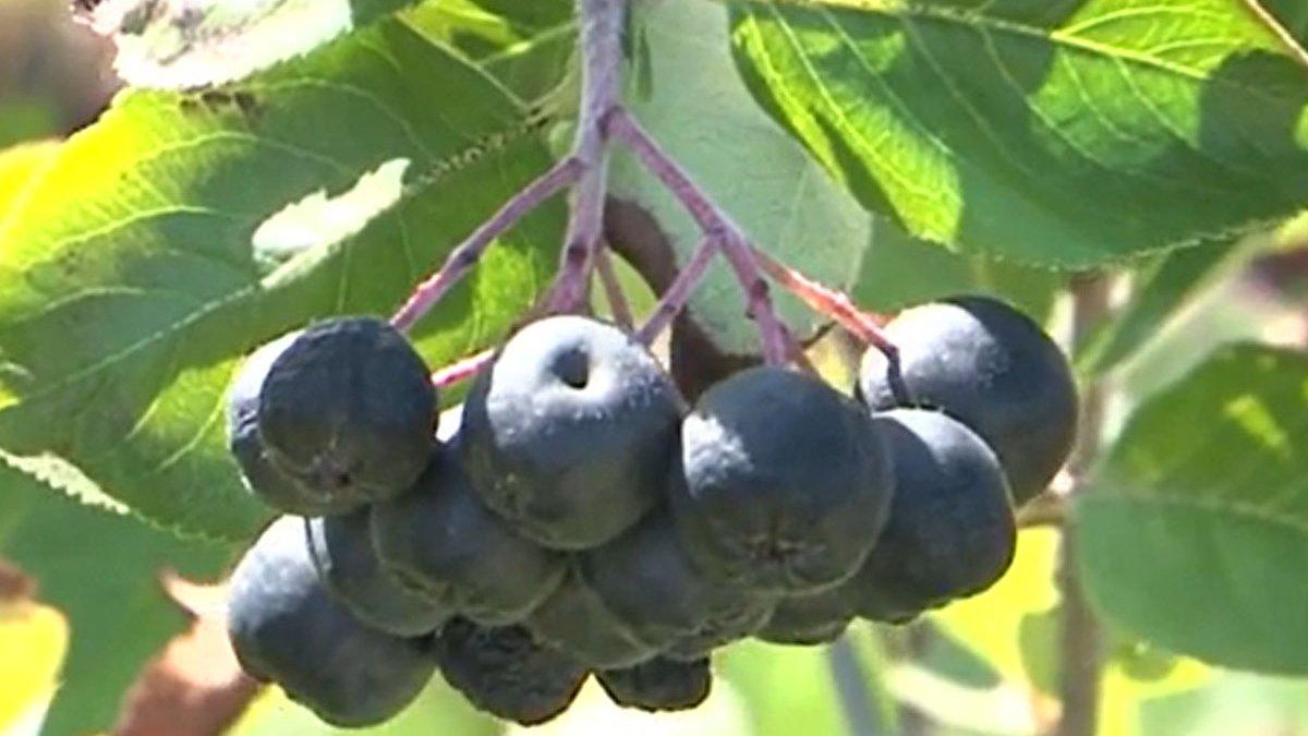 Reuniunea site ului de fructe