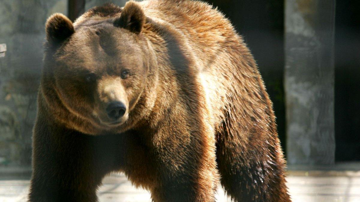 Cât ar fi plătit prinţul din Liechtenstein pentru a-l ucide pe ursul Arthur