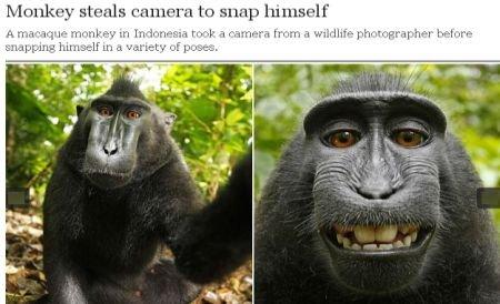 O maimuţă a furat aparatul unui fotograf şi şi-a făcut singură poze