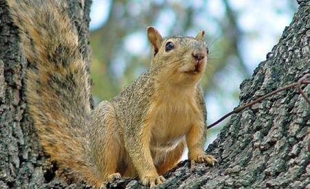 Prima fermă de veveriţe din România, deschisă la Braşov