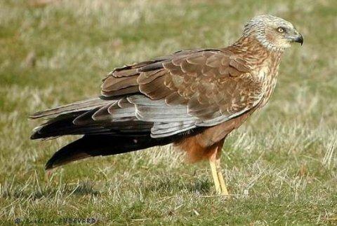 Водоплавающие и болотные охотничьи птицы.