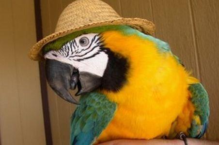 papagaio perdido foi devolvido à seu depois que ele disse à polícia seu endereço