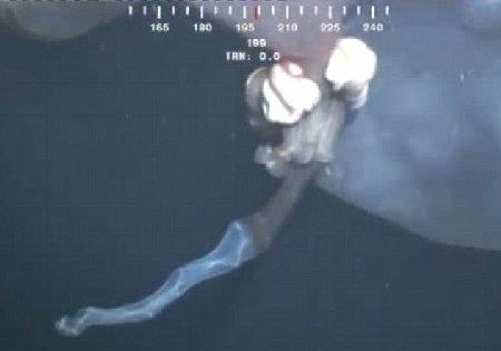 http://www.antena3.ro/thumbs/big/2012/05/09/o-creatura-misterioasa-a-fost-vazuta-plutind-in-apele-oceanului-cercetorii-nu-o-pot-explica-145616.jpg
