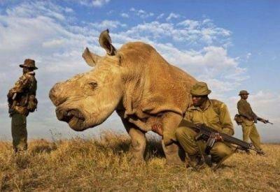 Este cel mai păzit animal din lume. Garda merge cu el NON STOP în junglă.