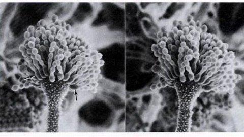 Mâncarea care ucide. Ce este AFLATOXINA, substanţa CANCERIGENĂ care se găseşte în sute de produse din România