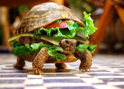 slow food fun