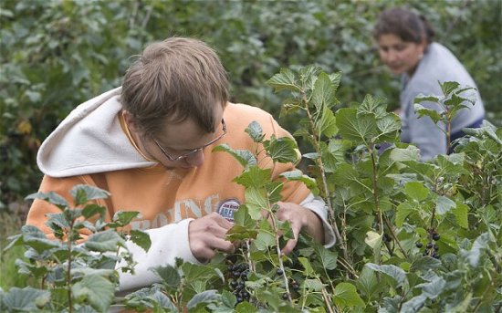 Extra 20,000 foreign workers could head to the UK to replace Romanian fruit pickers 114