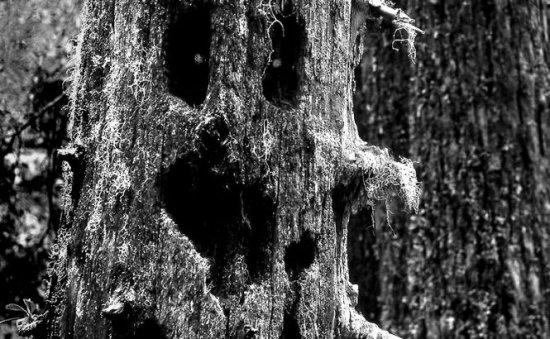 """Locuri """"bântuite"""" din România. Poveşti cu fantome şi fenomene paranormale, la graniţa din ficţiune şi realitate 407"""