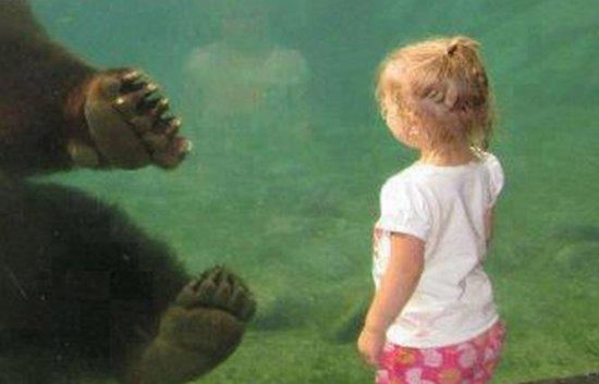 O imagine care îţi va da fiori. Întâlnirea impresionată dintre un copil şi un urs uriaş 407