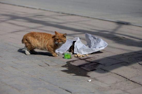 Nu s-a mişcat nici măcar o secundă de lângă partenera moartă. Pisica ce ne-a dat o lecţie impresionantă de devotament 442