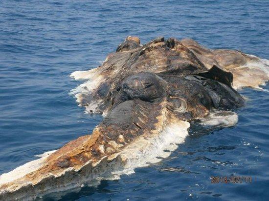 """Pescarii au încremenit când au văzut ce se apropie de nava lor. """"Parcă era o creatură preistorică"""" 442"""