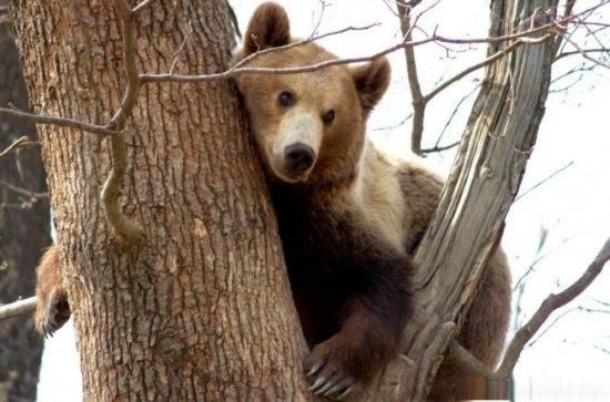 Urşii şi lupii din România, atracţia turiştilor germani 418