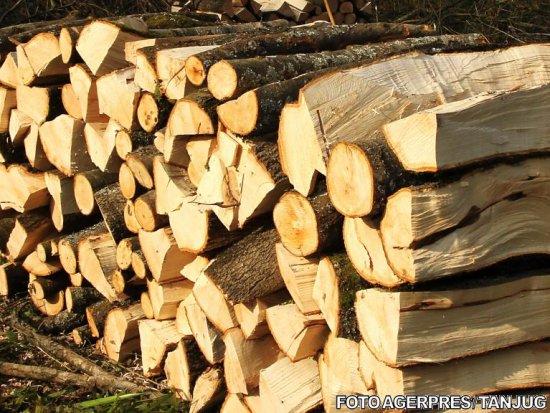 Prăpăd în pădurile României. Tăiau ilegal păduri pe raza a 3 judeţe 817
