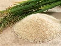 Restricţii pe piaţa UE la organismele modificate genetic
