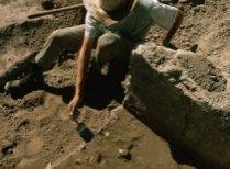 Scheletul bine conservat al unui strămoş al elefantului asiatic, dezgropat în Indonesia