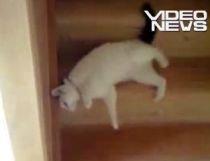 O pisicuţă ne învaţă noi metode de a coborî scările (VIDEO)