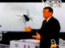 A prezentat rubrica meteo alături de...un păianjen uriaş (VIDEO)