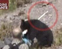 Japonia. Un urs a rănit nouă oameni la un popas turistic (IMAGINI ŞOCANTE)