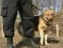 Câine poliţist, scos la licitaţie în Iaşi (VIDEO)