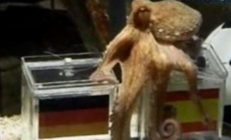 """Caracatiţa Paul, numită """"cetăţean de onoare"""" al unui oraş din Spania (VIDEO)"""
