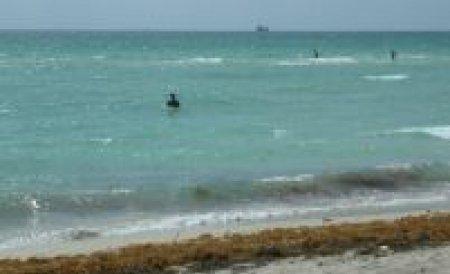 Alegele moarte de pe malul Mării Negre, folosite ca îngrăşământ