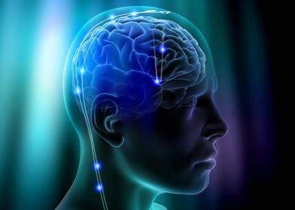 Studiu: Creierul uman se micşorează