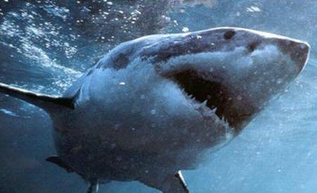 Australia. Un rechin de cinci metri a atacat violent o barcă cu pasageri
