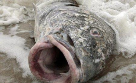 Brazilia. O sută de tone de peşti morţi, descoperiţi la malul Atlanticului