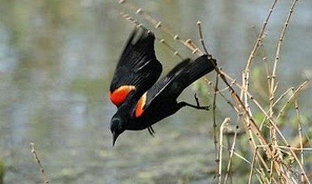 Ploaia de păsări moarte continuă în mai multe zone ale lumii