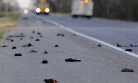 Incidentele bizare continuă: Alte sute de păsări moarte şi mii de peşti fără viaţă, în Texas şi Florida