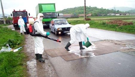 Covoare de dezinfecţie la punctele de frontieră din judeţul Constanţa împotriva febrei aftoase