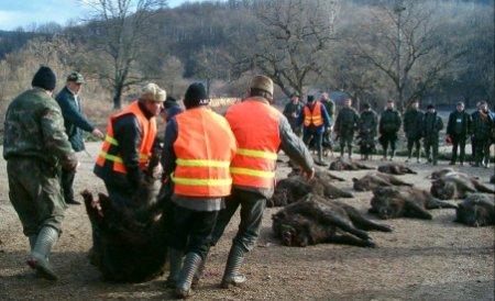 Prima zi a vânătorii de la Balc s-a încheiat. Au fost vânaţi peste 100 de mistreţi