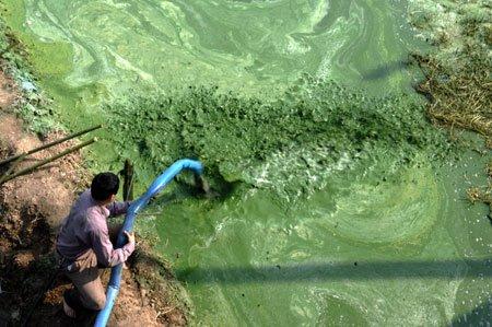 Românii au inventat îngrăşământul 100% natural din alge şi nămol rezidual