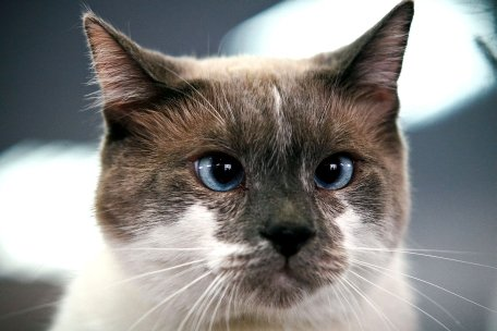 Agilitate de felină: O pasăre agasantă devine hrană pentru o pisică ageră
