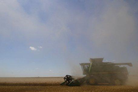 """Cândva """"grânarul Europei"""", România are astăzi cele mai reduse producţii la grâu, porumb şi cartofi"""