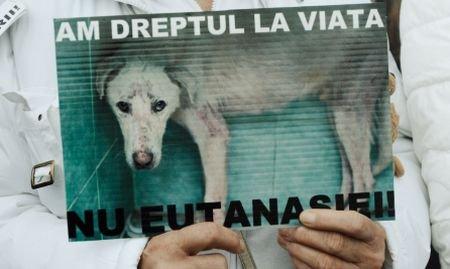 Descoperire şocantă: Mai mulţi câini morţi, într-o pădure din Ilfov. Animalele au fost otrăvite