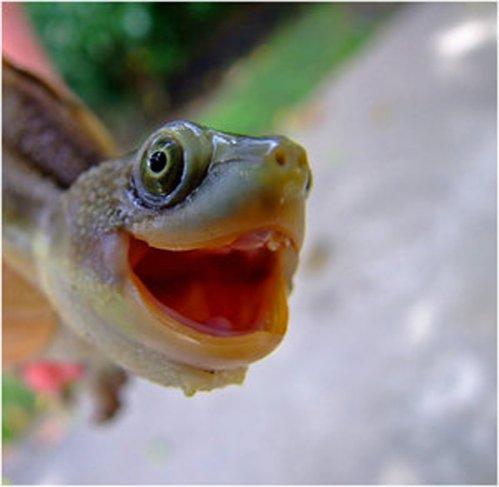 Cum se manifestă o broască ţestoasă în extaz