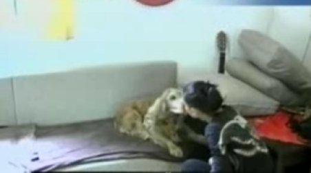 Noul trend canin: Hotelul pentru câini, cu televizor, webcam, mobilă şi încălzire în pardoseală
