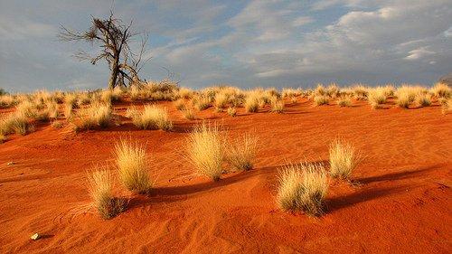 Doi australieni au supravieţuit patru zile cu nuci şi apă de ploaie în deşert