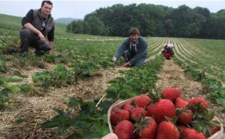 Spania intenţionează să restricţioneze piaţa muncii pentru români
