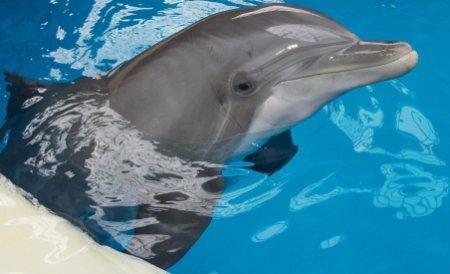 Salvarea delfinilor din Marea Neagră: 50 de pescari şi-au montat dispozitive acustice pe plasele de pescuit