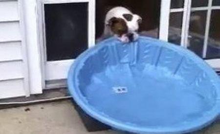 Un căţel perseverent: A reuşit să bage o mini-piscină în casă