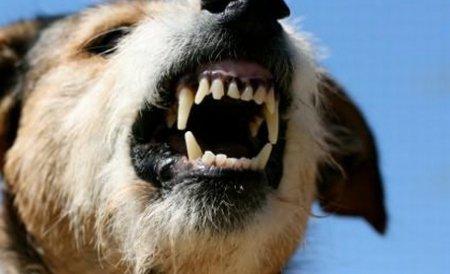 CEDO condamnă România pentru că nu a rezolvat problema câinilor comunitari