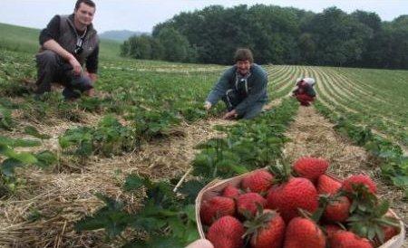 Românii vor avea nevoie de permis de muncă în Spania, de săptămâna viitoare