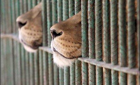 Zoo Oradea vinde peste 500 de animale. Vezi cine le va lua locul